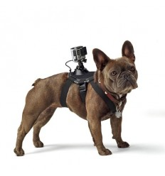 Supporto GoPro Fetch su cani per minicamera Hero
